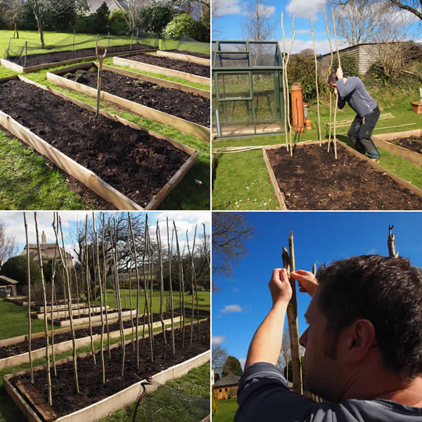 how to put up bean poles