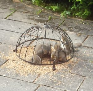 Twool - Garden Shows at twool HQ includes these baby squirrels feeding from the bird feeder